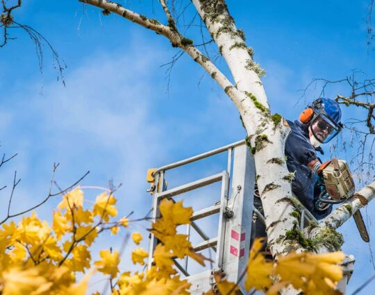 Commercial Tree Services-Jupiter-Tequesta Tree Trimming and Tree Removal Services-We Offer Tree Trimming Services, Tree Removal, Tree Pruning, Tree Cutting, Residential and Commercial Tree Trimming Services, Storm Damage, Emergency Tree Removal, Land Clearing, Tree Companies, Tree Care Service, Stump Grinding, and we're the Best Tree Trimming Company Near You Guaranteed!