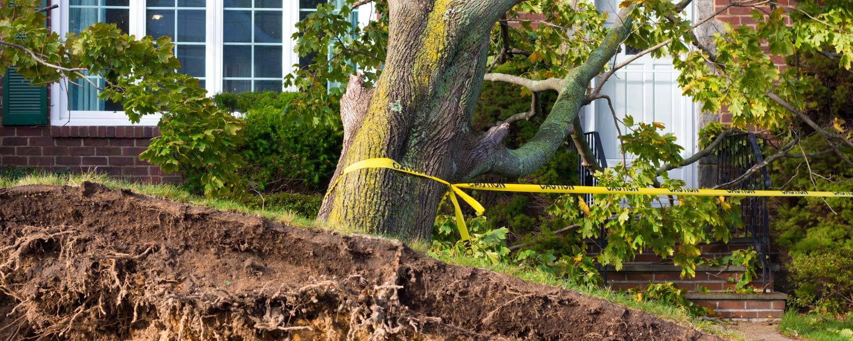 Emergency Tree Removal-Jupiter-Tequesta Tree Trimming and Tree Removal Services-We Offer Tree Trimming Services, Tree Removal, Tree Pruning, Tree Cutting, Residential and Commercial Tree Trimming Services, Storm Damage, Emergency Tree Removal, Land Clearing, Tree Companies, Tree Care Service, Stump Grinding, and we're the Best Tree Trimming Company Near You Guaranteed!