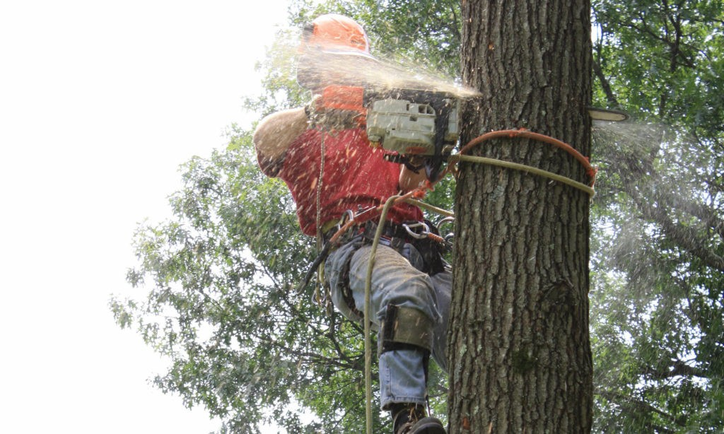 Jupiter-Tequesta Tree Trimming and Tree Removal Services Main Header-We Offer Tree Trimming Services, Tree Removal, Tree Pruning, Tree Cutting, Residential and Commercial Tree Trimming Services, Storm Damage, Emergency Tree Removal, Land Clearing, Tree Companies, Tree Care Service, Stump Grinding, and we're the Best Tree Trimming Company Near You Guaranteed!