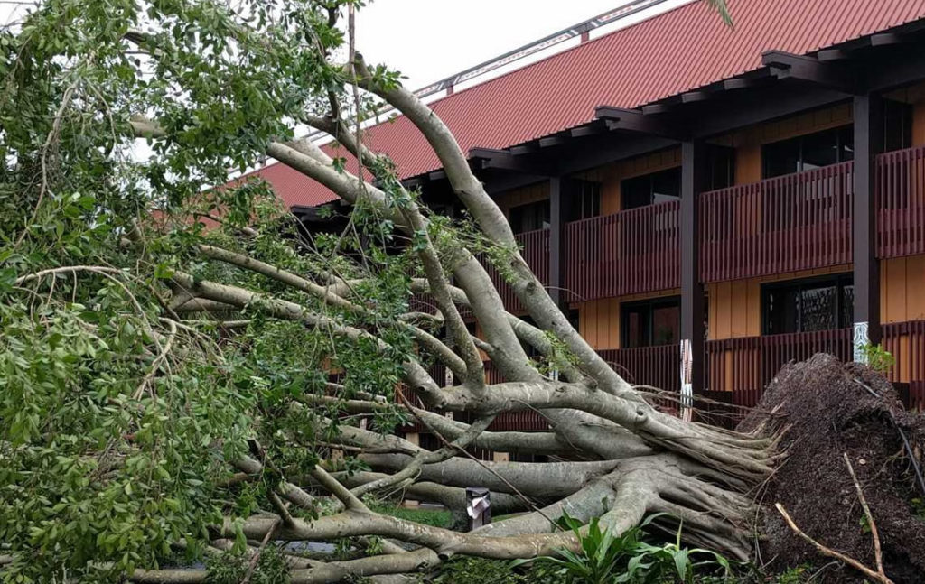 Storm Damage-Jupiter-Tequesta Tree Trimming and Tree Removal Services-We Offer Tree Trimming Services, Tree Removal, Tree Pruning, Tree Cutting, Residential and Commercial Tree Trimming Services, Storm Damage, Emergency Tree Removal, Land Clearing, Tree Companies, Tree Care Service, Stump Grinding, and we're the Best Tree Trimming Company Near You Guaranteed!