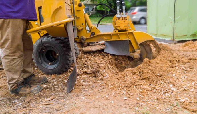 Stump Grinding & Removal-Jupiter-Tequesta Tree Trimming and Tree Removal Services-We Offer Tree Trimming Services, Tree Removal, Tree Pruning, Tree Cutting, Residential and Commercial Tree Trimming Services, Storm Damage, Emergency Tree Removal, Land Clearing, Tree Companies, Tree Care Service, Stump Grinding, and we're the Best Tree Trimming Company Near You Guaranteed!