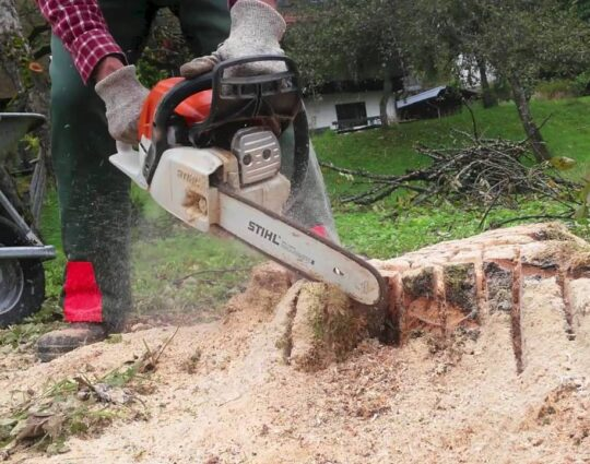 Stump Removal-Jupiter-Tequesta Tree Trimming and Tree Removal Services-We Offer Tree Trimming Services, Tree Removal, Tree Pruning, Tree Cutting, Residential and Commercial Tree Trimming Services, Storm Damage, Emergency Tree Removal, Land Clearing, Tree Companies, Tree Care Service, Stump Grinding, and we're the Best Tree Trimming Company Near You Guaranteed!
