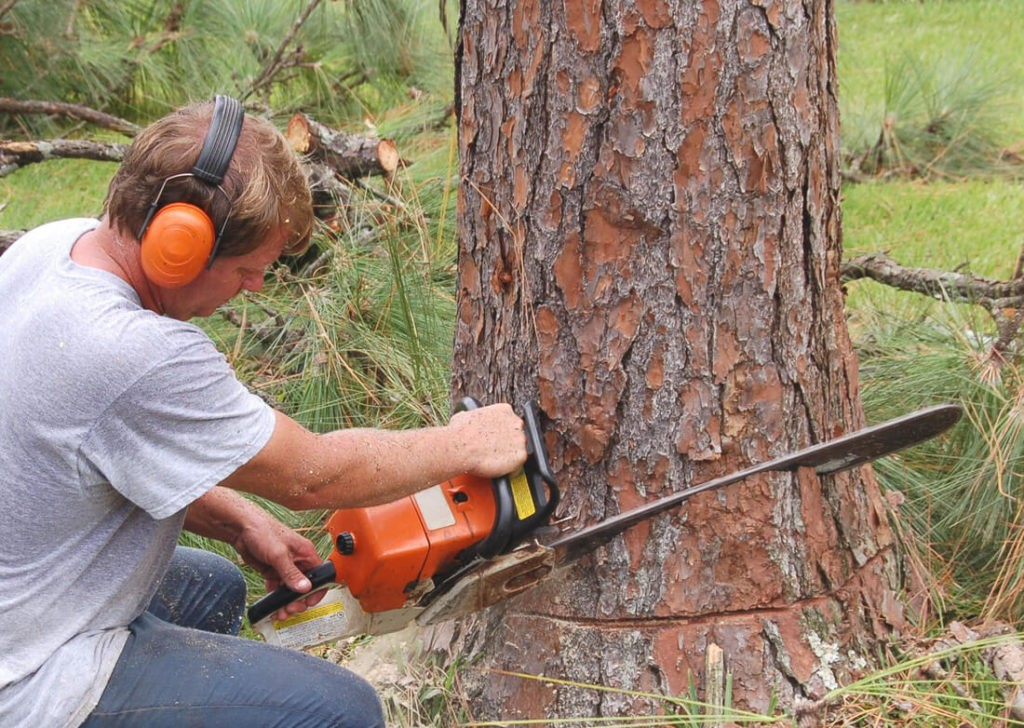 Tree Cutting-Jupiter-Tequesta Tree Trimming and Tree Removal Services-We Offer Tree Trimming Services, Tree Removal, Tree Pruning, Tree Cutting, Residential and Commercial Tree Trimming Services, Storm Damage, Emergency Tree Removal, Land Clearing, Tree Companies, Tree Care Service, Stump Grinding, and we're the Best Tree Trimming Company Near You Guaranteed!