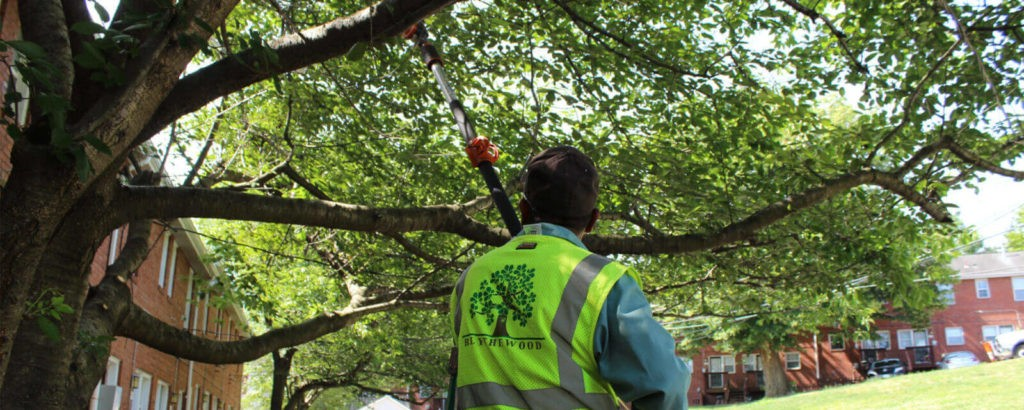 Tree Doctor-Jupiter-Tequesta Tree Trimming and Tree Removal Services-We Offer Tree Trimming Services, Tree Removal, Tree Pruning, Tree Cutting, Residential and Commercial Tree Trimming Services, Storm Damage, Emergency Tree Removal, Land Clearing, Tree Companies, Tree Care Service, Stump Grinding, and we're the Best Tree Trimming Company Near You Guaranteed!