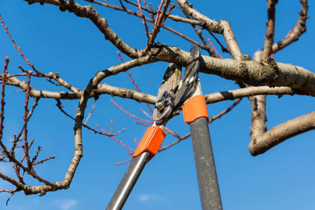 Tree Pruning-Jupiter-Tequesta Tree Trimming and Tree Removal Services-We Offer Tree Trimming Services, Tree Removal, Tree Pruning, Tree Cutting, Residential and Commercial Tree Trimming Services, Storm Damage, Emergency Tree Removal, Land Clearing, Tree Companies, Tree Care Service, Stump Grinding, and we're the Best Tree Trimming Company Near You Guaranteed!