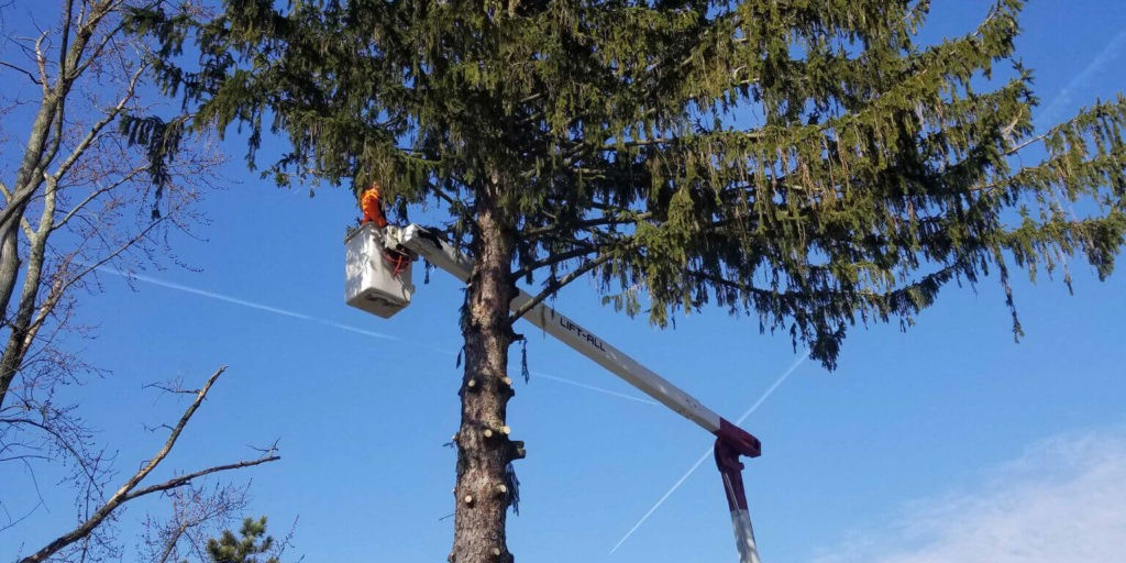 Tree Removal-Jupiter-Tequesta Tree Trimming and Tree Removal Services-We Offer Tree Trimming Services, Tree Removal, Tree Pruning, Tree Cutting, Residential and Commercial Tree Trimming Services, Storm Damage, Emergency Tree Removal, Land Clearing, Tree Companies, Tree Care Service, Stump Grinding, and we're the Best Tree Trimming Company Near You Guaranteed!