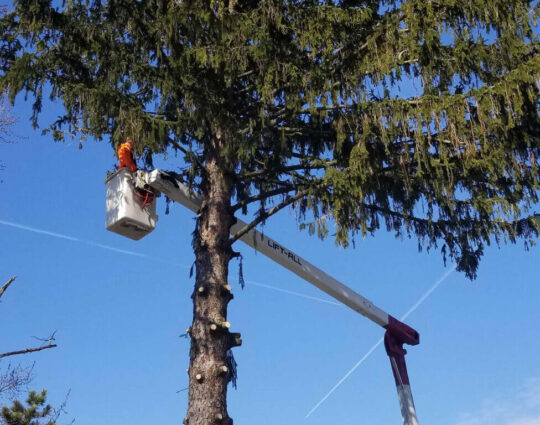 Tree Pruning & Tree Removal-Jupiter-Tequesta Tree Trimming and Tree Removal Services-We Offer Tree Trimming Services, Tree Removal, Tree Pruning, Tree Cutting, Residential and Commercial Tree Trimming Services, Storm Damage, Emergency Tree Removal, Land Clearing, Tree Companies, Tree Care Service, Stump Grinding, and we're the Best Tree Trimming Company Near You Guaranteed!