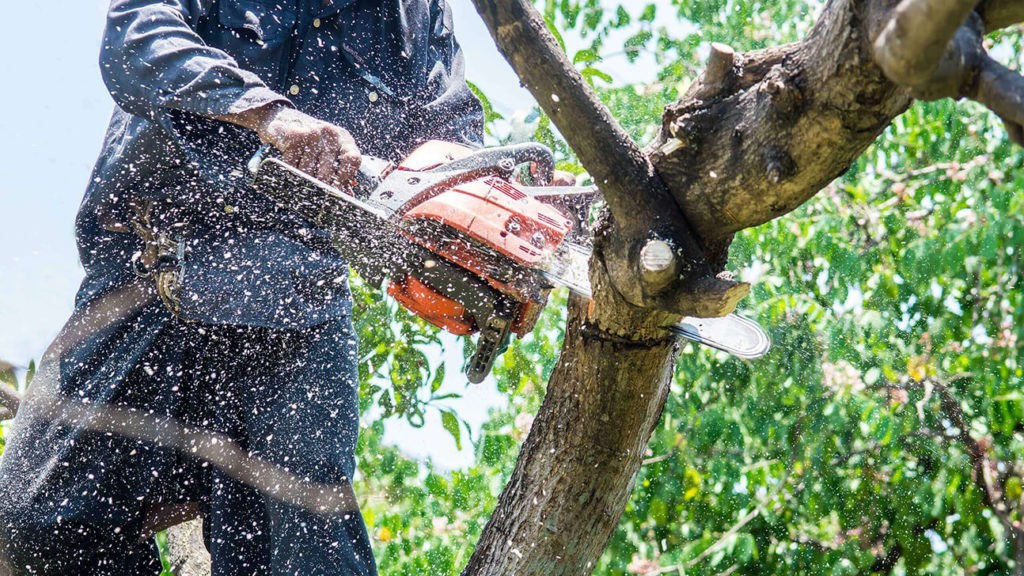 Tree Trimming-Jupiter-Tequesta Tree Trimming and Tree Removal Services-We Offer Tree Trimming Services, Tree Removal, Tree Pruning, Tree Cutting, Residential and Commercial Tree Trimming Services, Storm Damage, Emergency Tree Removal, Land Clearing, Tree Companies, Tree Care Service, Stump Grinding, and we're the Best Tree Trimming Company Near You Guaranteed!