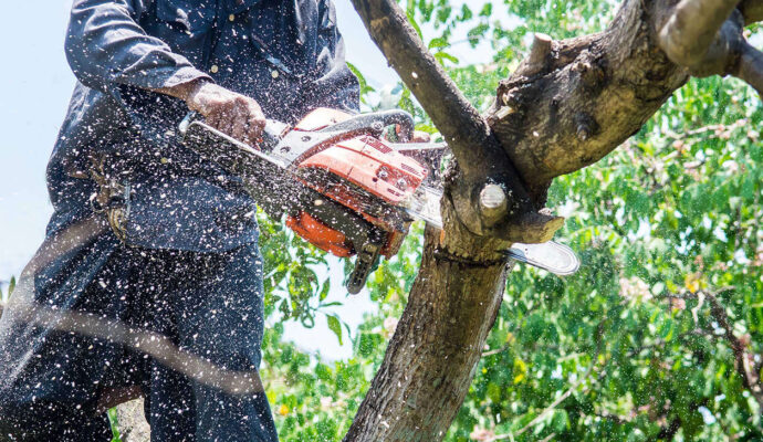 Tree Trimming Services-Jupiter-Tequesta Tree Trimming and Tree Removal Services-We Offer Tree Trimming Services, Tree Removal, Tree Pruning, Tree Cutting, Residential and Commercial Tree Trimming Services, Storm Damage, Emergency Tree Removal, Land Clearing, Tree Companies, Tree Care Service, Stump Grinding, and we're the Best Tree Trimming Company Near You Guaranteed!
